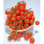 Pomodori Ciliegino Bio